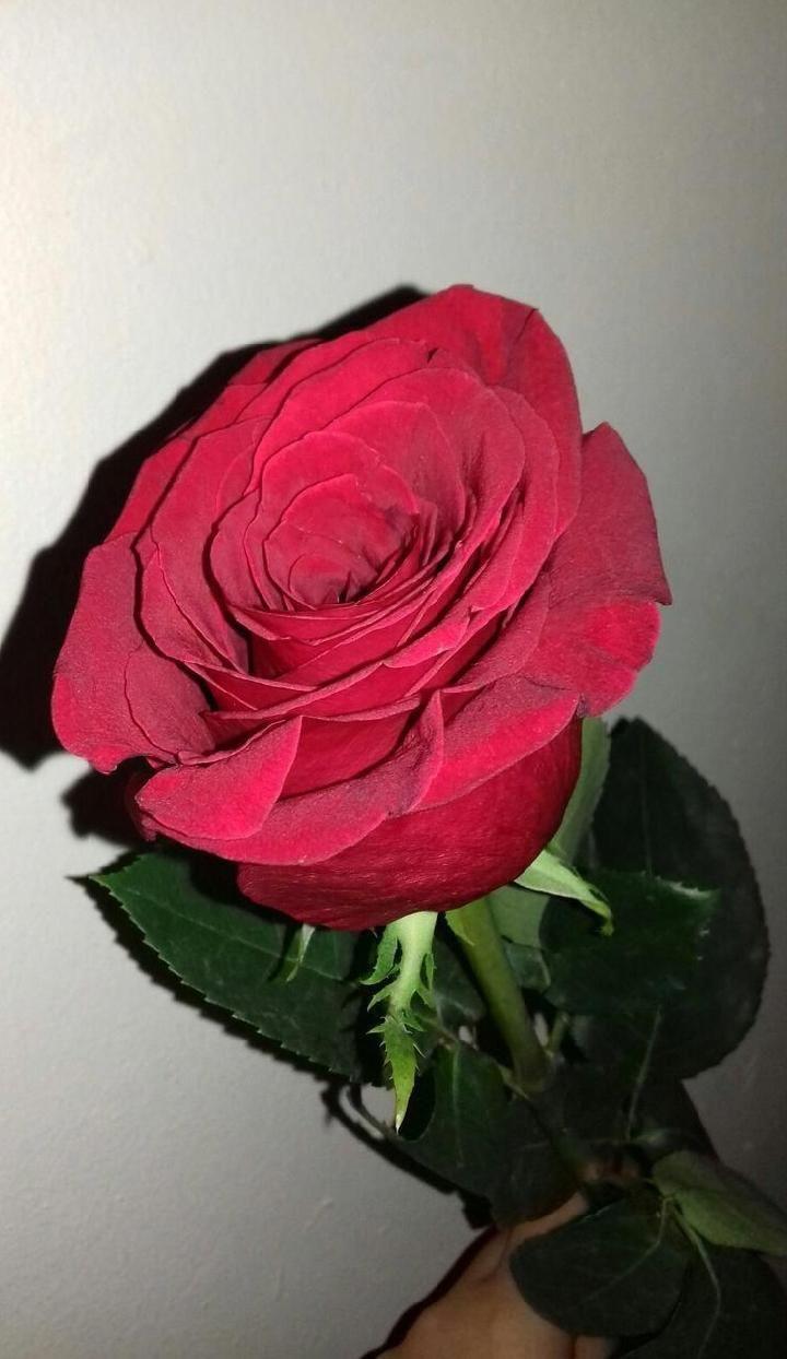 A Love Mawar Merah Bunga Bunga Kering