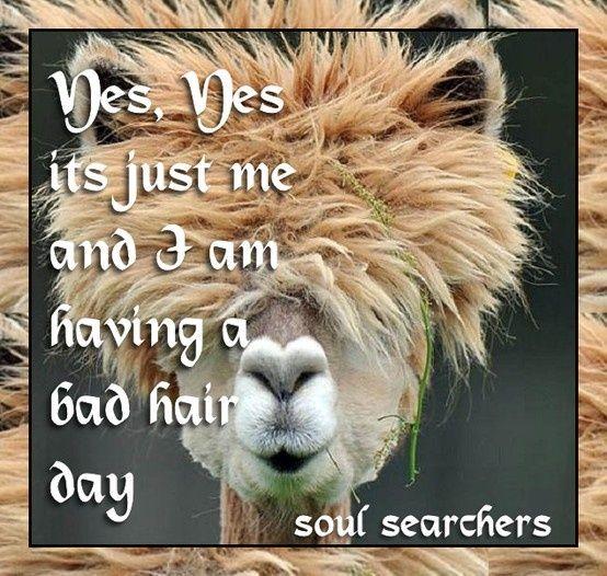 Bad Hair Day Spanishdict Answers