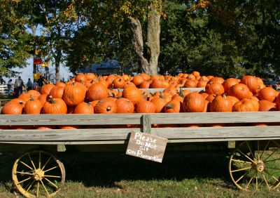 WE Got our pumpkins 2013 off of a wagon just like this .nobody was around just a money box with a note.LOVE IT