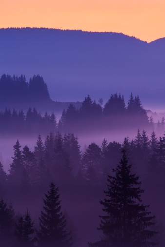 Mystic fog covered  trees at dawn in the  Mountains - Ukraine #Carpathian