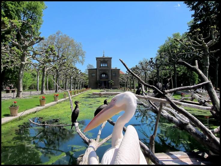 Wilhema, Stuttgart, Germany, Pellican, Sunny Spring Day, Zoo, Animals