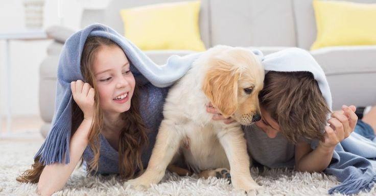 É melhor para as crianças ter um cachorro do que um irmão, aponta estudo