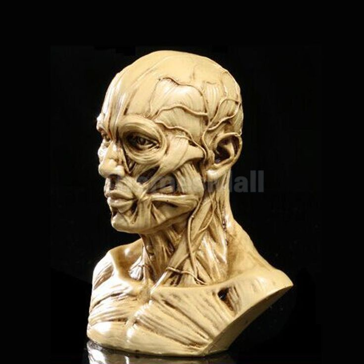 10Cm Anatomical Head Human Skull Head Muscle Bone Drawing Antique Yellow