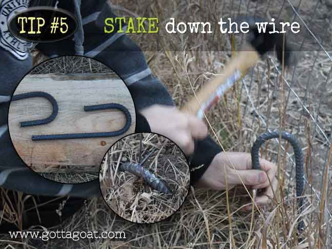 Stake Down the Wire