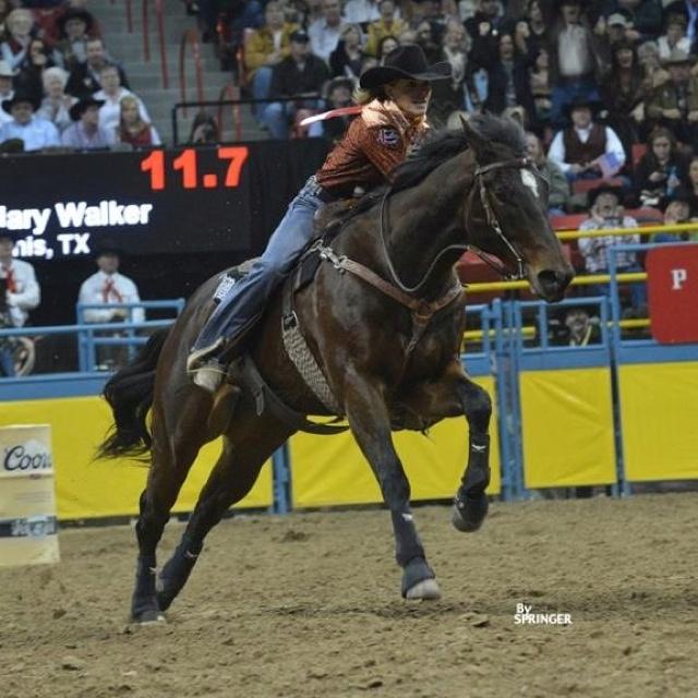24 Best Charmayne James Images On Pinterest Barrel Horse