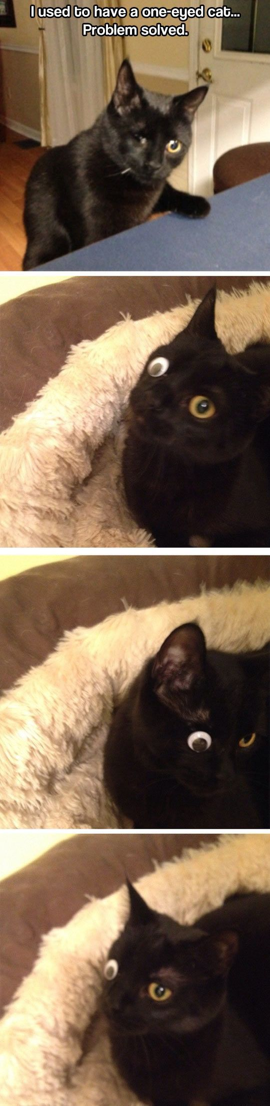 Best Funny Cats Images On Pinterest Board Cats And Friends - 18 hilarious sad cat problems that might explain why your cats so moody