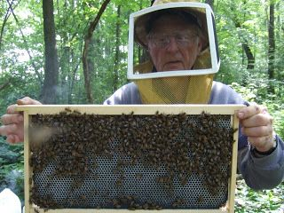 beekeeper Lorne at Bee Magic Chronicles