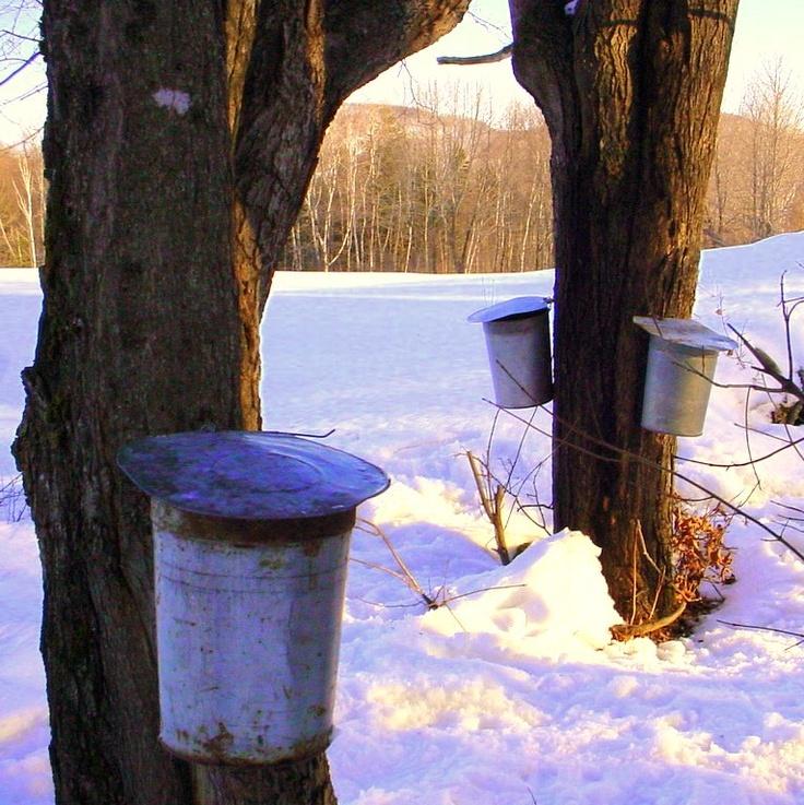 Mejores 42 Imágenes De Vermont Maple Syrup En Pinterest