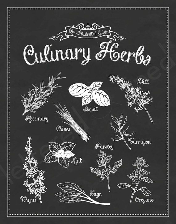 Culinary Herbs: An Illustrated Guide - 11x14 print - Kitchen Art, Green, Home, Decor, Culinary, Gourmet. $23.00, via Etsy.