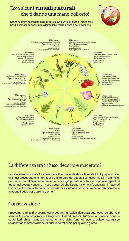 Proteggere le piante usasndo le piante