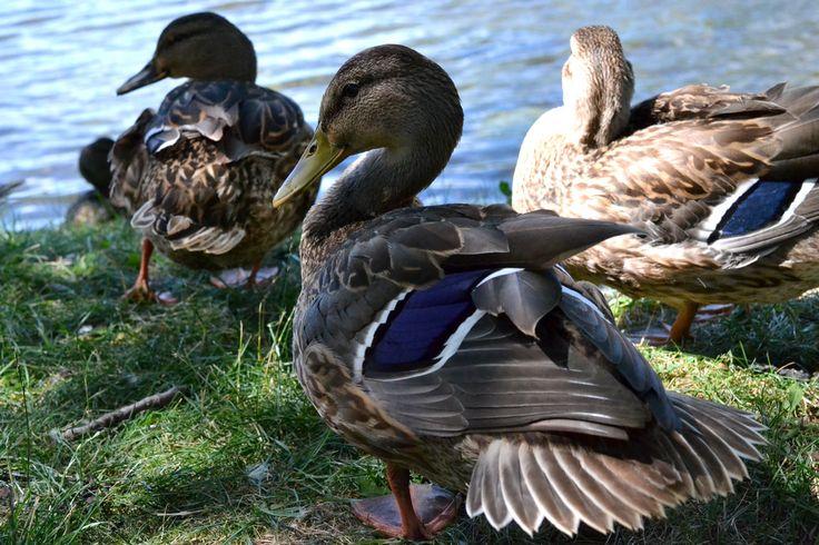 The squad by the pond. La gang au complet au bord de l'étang.