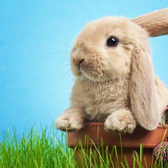 В зоомагазине для кроликов можно найти немало вкусного. Есть и гранулированные корма, и сено, и сухие травы. Какой же корм выбрать для кролика? Сена ему купить или упаковку хрустящего корма? И того, и другого! Кроликам нужны и питательные сухие корма, созданные на основе злаковых, и ароматное сено – от которого эти зверушки, прямо скажем, без ума.