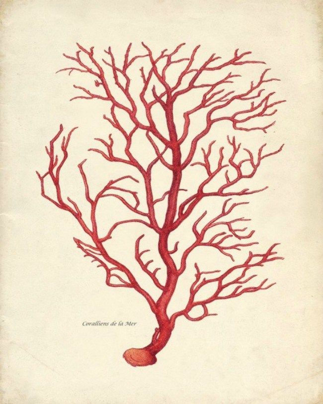 En busca de ideas con detalles de coral www.loftandtable.com