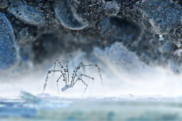 生态摄影:冰雪世界_米堆网