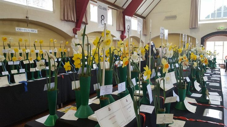 The Surrey Chrysanthemum and Dahlia Society Spring Show at Abinger Hammer in 2016.