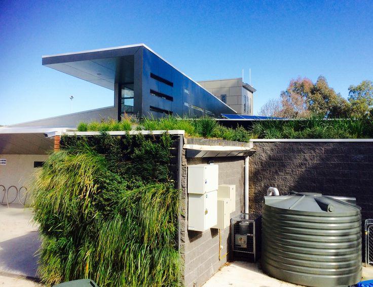 External green wall, Glen Iris