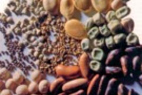 Alimentazione naturale - Terra Nuova