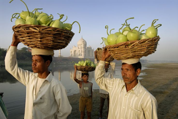 Villagers taking melons across the Yamuna River in front of Taj Mahal. www.tripwired.com.au