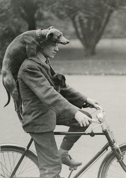 Pour promener son chien, il y a cette solution... Ou le panier pour chien. A vous de choisir! Si la première option vous parait périlleuse, rendez-vous sur www.hollandbikes.com :)