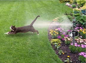 Motion Detector To Keep Dogs And Cats Out Of Flowers