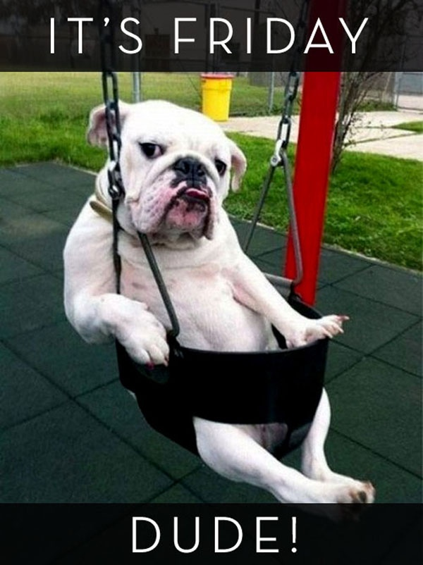 65 best week day dogs images on pinterest good morning for Dog day sitting