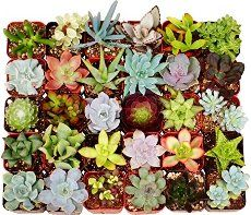 Having well draining soil is crucial for succulents. This post has the perfect succulent soil mix recipe and tells you where to buy the components!