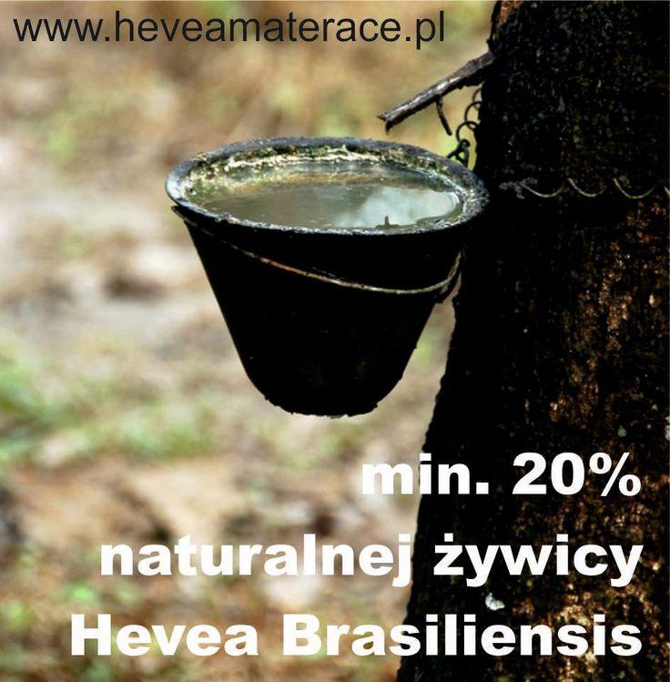 Kolekcja dzianin | Fabryka Materaców Hevea | polski producent materaców