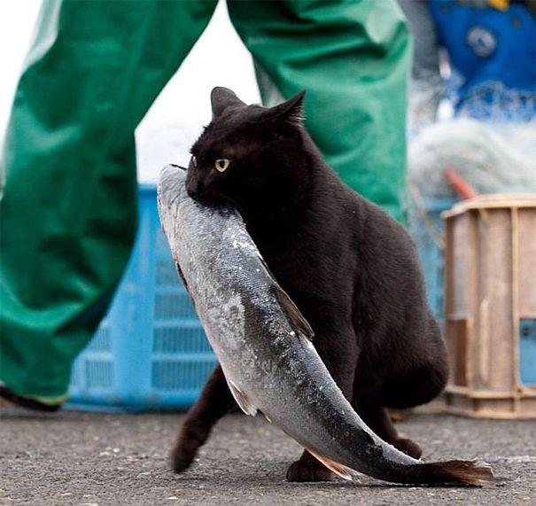 Chat qui vole un poisson