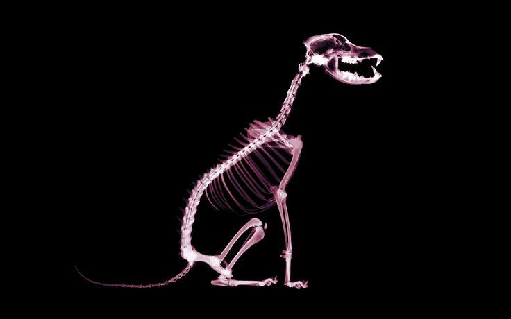 Images for Desktop: skeleton wallpaper image (Blake Sheldon 1920 x 1200)