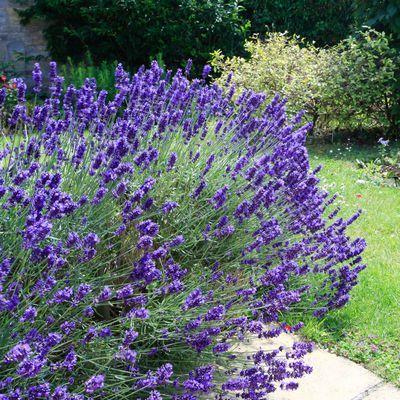 plantes d 39 ext rieur sans arrosage 15 photos pour faire votre choix jardin. Black Bedroom Furniture Sets. Home Design Ideas