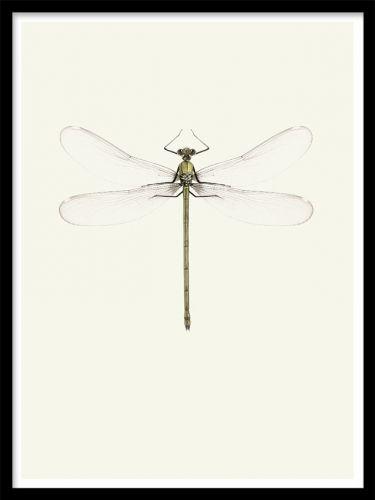 Vintage Dragonfly poster. Tavla med trollslända. En snygg affisch med en trollslända i vintage stil. Passar perfekt till trendig och stilren inredning med sin enkla utformning.