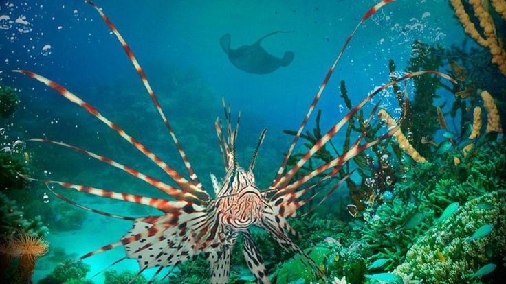 Pictures From Under The Sea   You will download Under the Sea 3D , resolution is 1600x900 . thanks