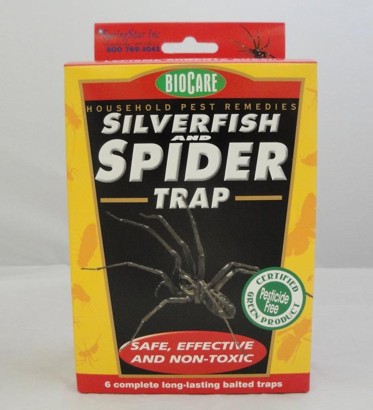 Got spiders? Here's a non-toxic way to trap 'em (silverfish, too).