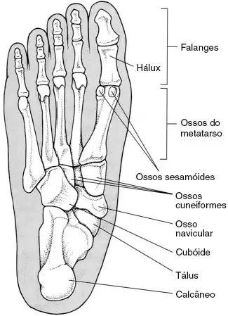 Informações dos ossos do pé