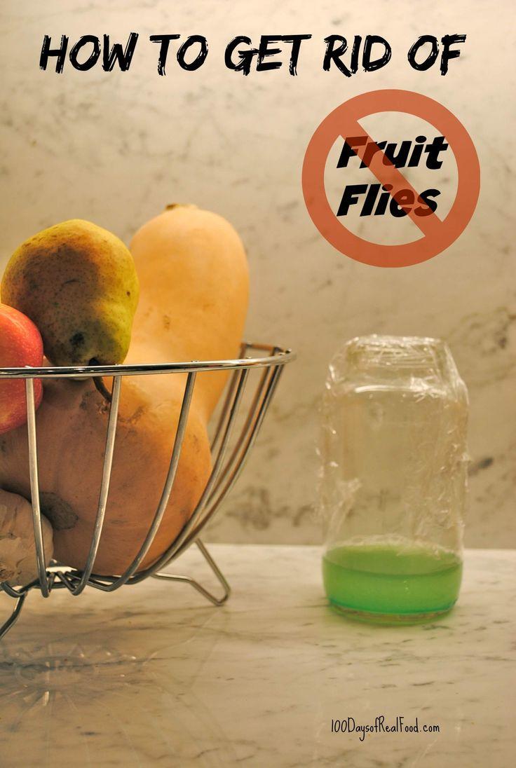 how to get rid of fruit flies in green bin