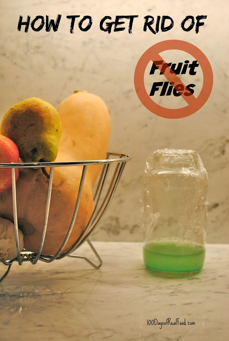 Fruit flies can lay about 500 eggs, and the entire lifecycle from egg to adult can be completed in a week. EEEEK! Here are 3 ways to get rid of fruit flies.