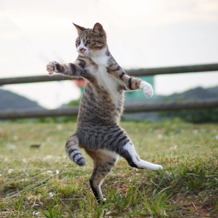 Playful Cats Appear to Practice Martial Arts While Reaching for a Toy Above Their Heads