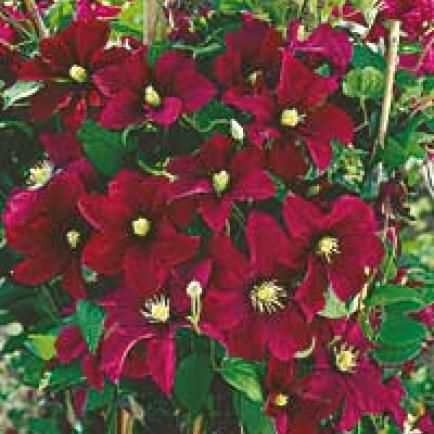 1347 best garten images on pinterest terrace flowers and garden ideas. Black Bedroom Furniture Sets. Home Design Ideas