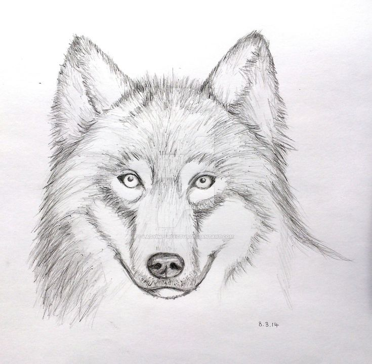 wolf face drawing google search