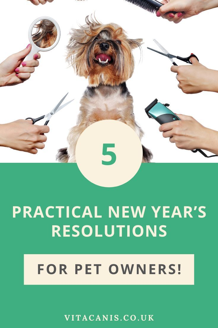 Jumping Into 2020 Dog Health Tips Best Dog Training Pets