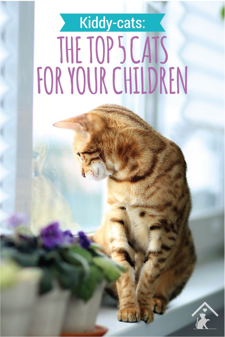 Looking for an active pet for you kids? The Bengal cat breed is super cute, playful and affectionate. Click the pin to learn more!