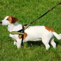 #dogalize Guinzaglio per cani, fedele alleato per cane e padrone #dogs #cats #pets