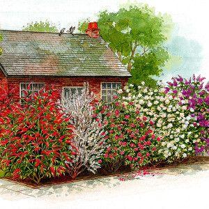 Haie parfumée fleurie | lilas mauve (Syringa Vulgaris) + seringat blanc (Philadelphus 'Virginal') + rosier arbustif (Rosa Rugosa) + chèvrefeuille (Lonicera Fragrantissima) + arbuste aux papillons (Buddleja Davidii) > long. 4,5m | plant. : octobre-juin ; expo : soleil mi-ombre ; Ht : 1,5-3 m | Creusez tranchée 60cm, ajoutez au fond du terreau ou compost, un peu de sable. Arrosez abondamment puis régulièrement jusqu'en automne. 1 arbuste/80cm