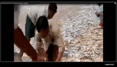 Galeri Pertanian / Perkebunan / Perikanan: Ikan Teri (Ikan Bilis)  : Pengertian, Pemanfaatan ...