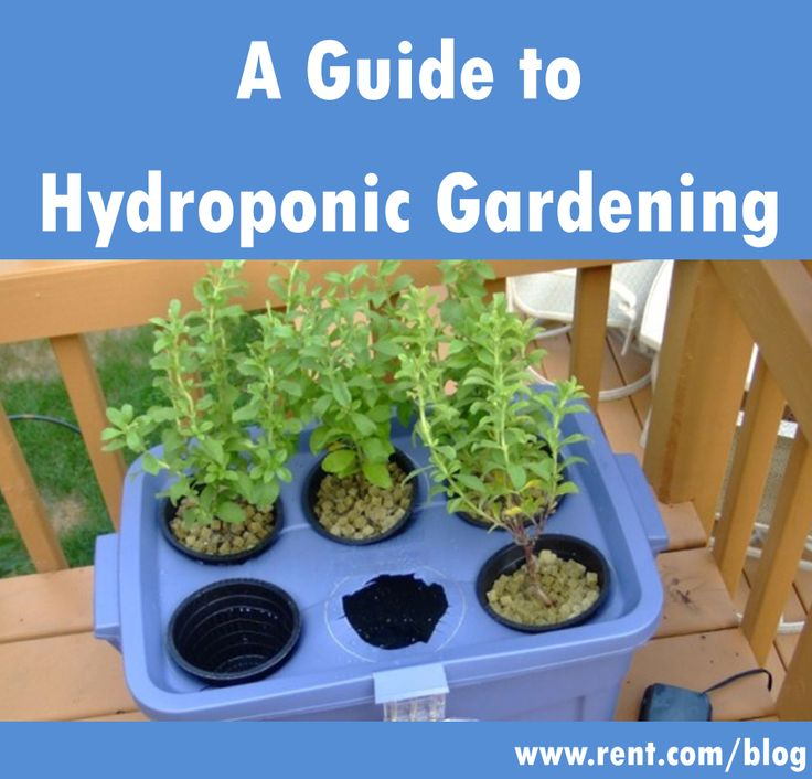 What's more environmentally friendly than a #garden? Hydroponic #gardening!