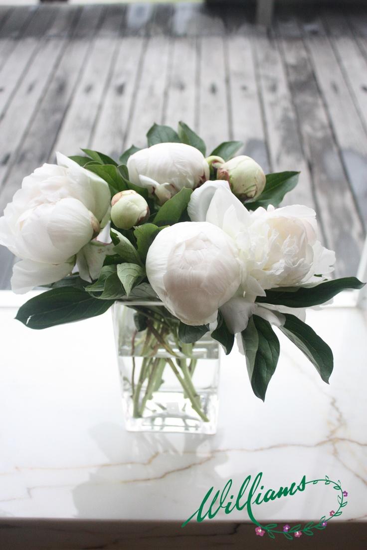 Pure White Peony Roses.
