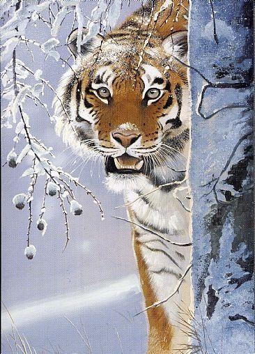 Amur Tiger by Pollyanna Pickering