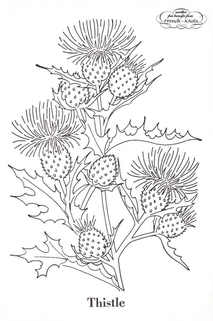 vintage embroidery patterns | Poppies, Thistles and Goldenrod Flowers Embroidery Transfer Pattern