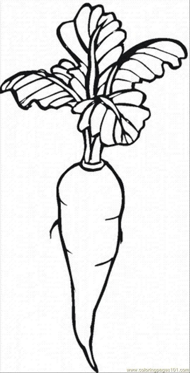 18 Coloring Page Carrots