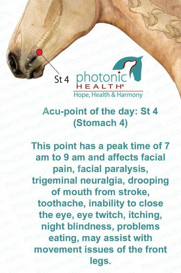 Mejores 8 imágenes de Photonic Therapy en Pinterest | Acupuntura ...